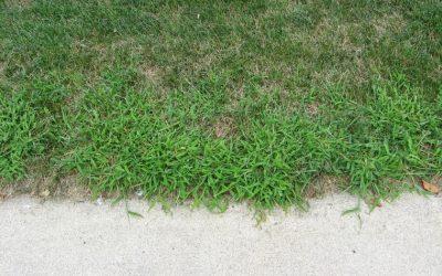 Grassy Weeds