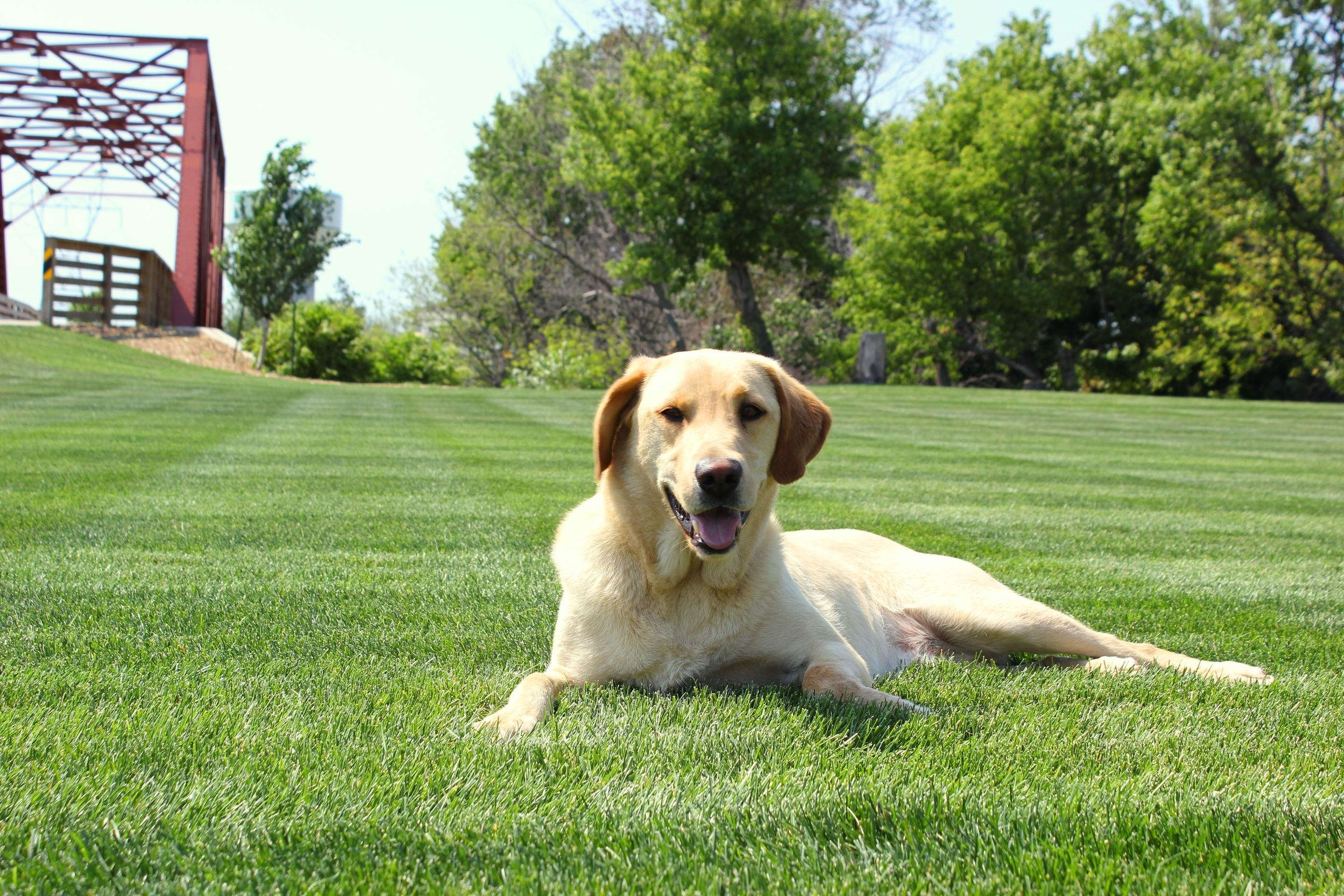 5 Steps of a Healthy Lawn