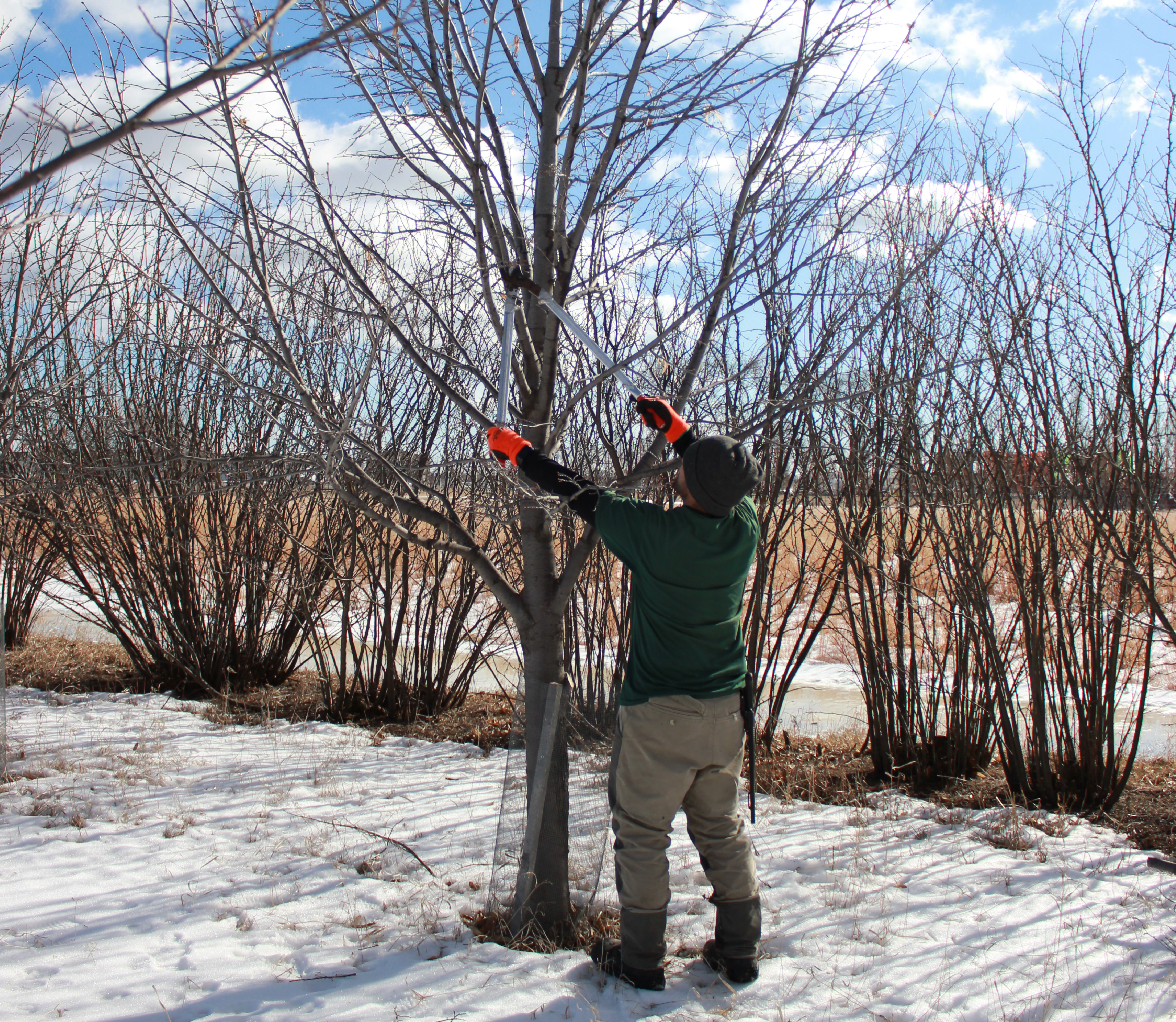 Tips for Tree Pruning